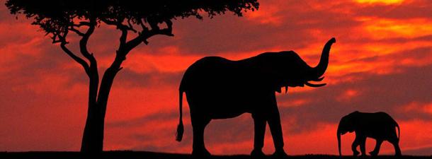 Из Африки с любовью
