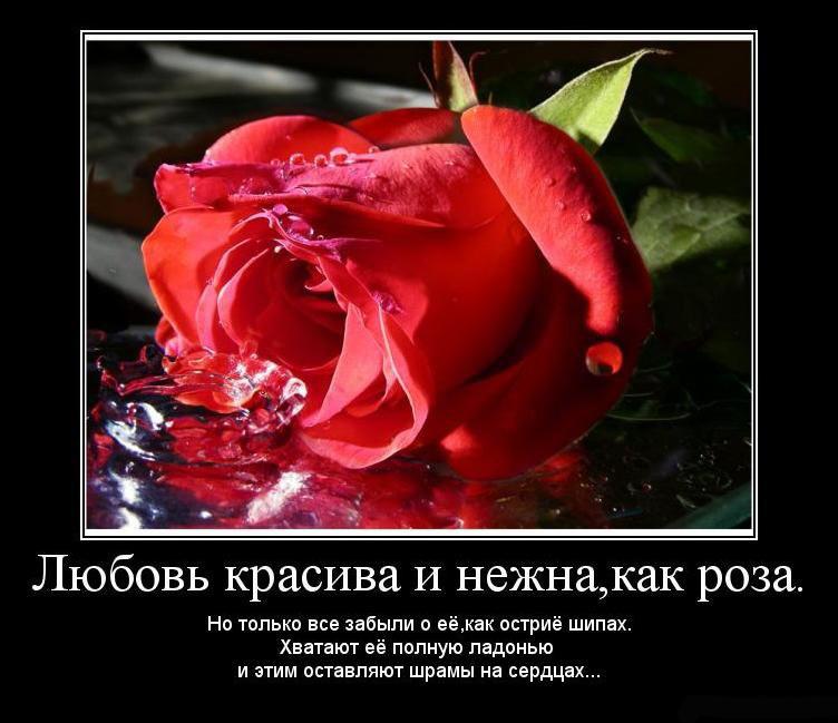 прекрасные красивые картинки
