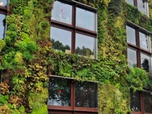 Выбираем вьющиеся растения для украшения фасада